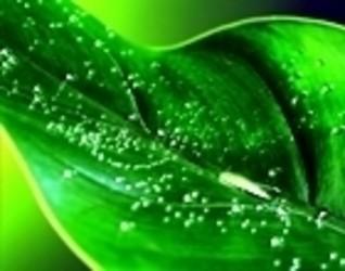 娱乐资讯_【绿色养眼壁纸免费下载】绿色养眼桌面壁纸-01 -ZOL软件下载