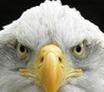鹰眼摄像头监控录像软件2015