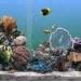 热带鱼水族箱3d屏保3.3