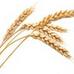 麦子专业视频下载软件 1.1