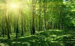 森林 Windows7官方桌面主题